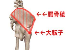 腸骨稜 大転子 中臀筋