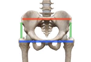 骨盤 大腿骨 大転子