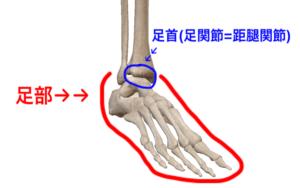 足首 足部 距腿関節