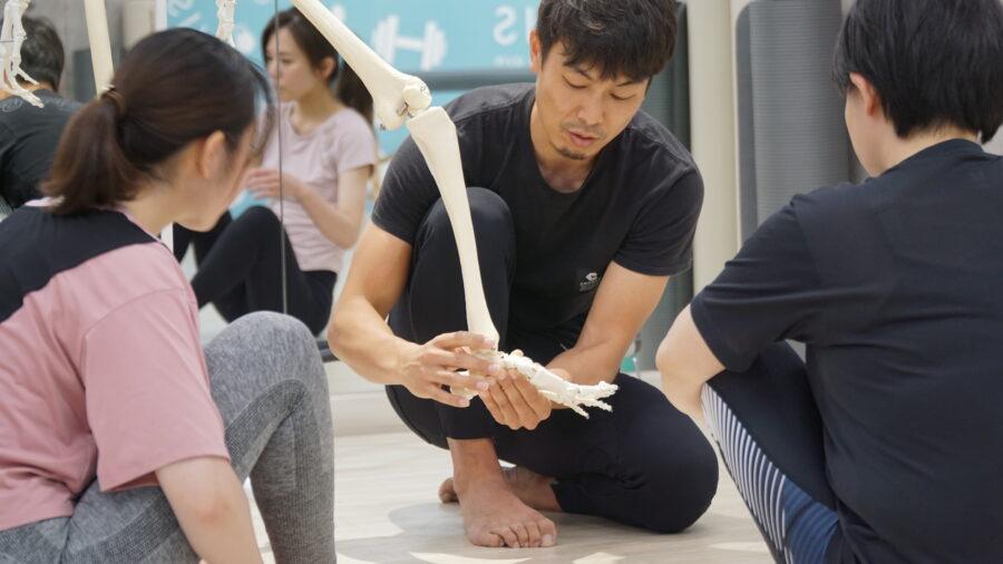 足首の骨と筋肉の解説