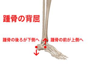 踵骨 背屈