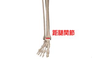 距腿関節①