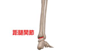 距腿関節②
