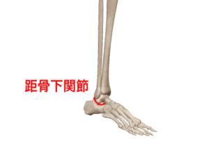 距骨下関節②