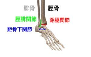 脛骨 腓骨 距腿関節 距骨下関節 脛腓関節