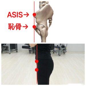 骨盤ニュートラルポジション 恥骨 ASIS