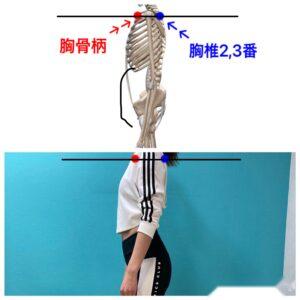 胸骨柄 胸椎2・3番 同じライン