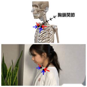 胸をふくめる 胸鎖関節